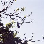upsidedown monkey