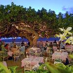 Hau Tree Lanai Foto