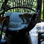 Monkeys on our terrace