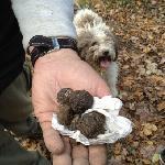 we found truffles!