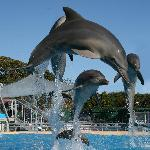 Pet Porpoise Pool - Dolphin Marine Magic
