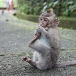 Des singes adorables!