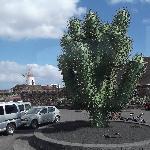 Cactus Garden car park