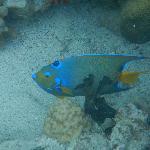 Foto di Waterlemon Cay
