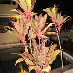 Pool Plant