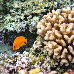 Gioco di colori fra pesci e coralli (2)