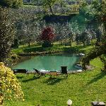 The Natural Pool where the Italian frogs sing amazing songs.