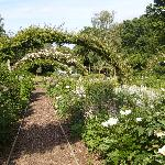 Rose arches