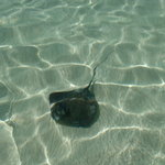 Gibbs Cay