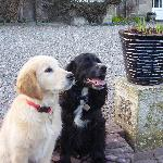 Bailey & Murphy