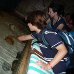 touch pool horseshoe crabs/starfish
