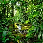 another magical rainforest view