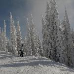 Revelstoke Ski Area - Famous Powder