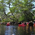 Kayak Golondrina River