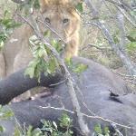 il pranzo dei leoni