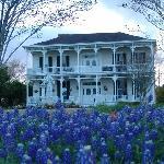 Best Texas Bluebonnets