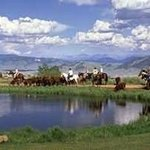 Moving Cattle at the Dude Ranch