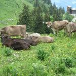 Tierisch schön ist`s im Bregenzerwald