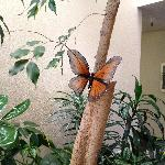 Monarch Butterfly in the Lobby Area