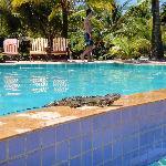 Iguana sunbathing at pool
