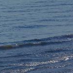 Foto de The Oceans at Cherry Grove