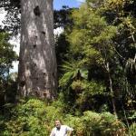 Kauri tree and me
