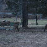 Deer outside the cabin after sunset