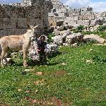 Bimbo con mulo