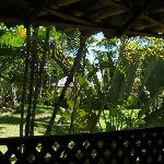 View from my balcony (bungalow 1)