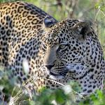 Kruger Park Safari with Outlook