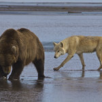 Alaska Bear Adventures - Day Tours