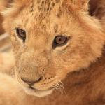 Emirates Park Zoo Foto