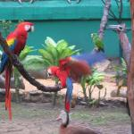lovely parrots in the aviary