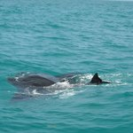Holbox Whale Shark Tours with Willy's Tours