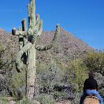 Horseback riding near an old saguaro.