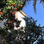 HotelLodi_Garden