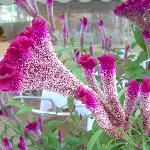 Season for lovely flowers