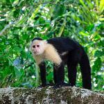 Un signe dans la jungle, cette photo fut prise lors de notre excursion sur le canal