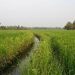 Reisfelder hinterm Haus