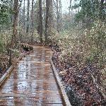 The boardwalk loop trail is a very easy hike