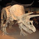 Stegasaurus!