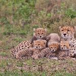 Cheeta family portrait