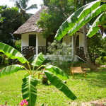 our bungalows in the tropical garden