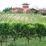 Excellent vineyard