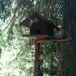 la posizione dell'hotel, al limitare del bosco, permette l'osservazione degli animali