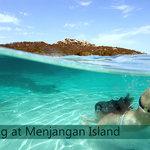 Snorkeling Trip to Menjangan Island