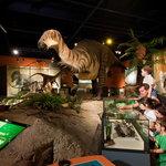 Iguanodon in dinosaur gallery