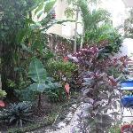 Garden at Posada Luna del Sur 5