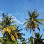 Photo of Jambiani Beach Hotel