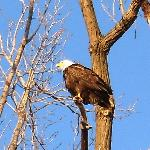 Saw a Bald Eagle during my Stay